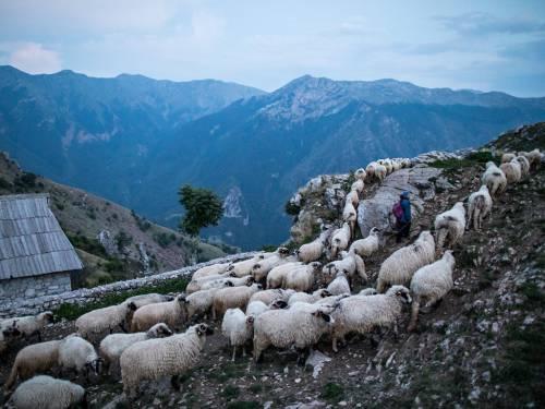 Bosnia và Herzegovina: Khi trời trở tối, đàn cừu từ đồng cỏ trở về làng Lukomir trên núi Bjelasnica, ngọn núi thuộc Bosnia và Herzegovina, một quốc gia nằm tại đông nam Âu. Lukomir là nhà của 17 gia đình với nền văn hóa đậm tính truyền thống rất đặc biệt.