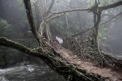 Ấn Độ: Một nhóm trẻ em đang băng qua chiếc cầu kết bằng rễ cây ở phía đông đồi Khasi, Meghalaya. Những cây cầu như thế này rất phổ biến ở đây và đều được chính tay người dân sống xung quanh kết nên, bởi chúng cần thiết cho đời sống của người dân vùng địa hình đồi núi dốc đứng.